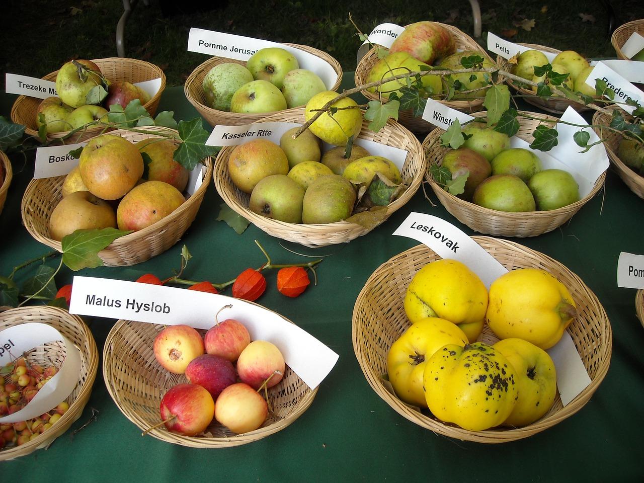 Fruit-Fruits-Pomology-Fruit-Recognition-Apples-954928